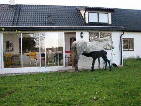 Hästgård med ridhus till salu